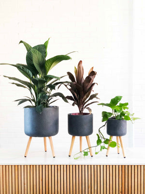 Open image in slideshow, Bowknot Tripod Plant Stands | Indoor Pot | Interior Jungle