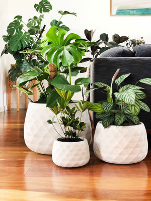 Diamond Egg Planters | Indoor Pot | Interior Jungle