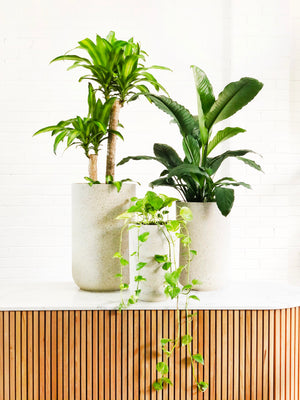 Open image in slideshow, Petrichor Tall Planter