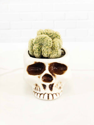 Skull Planter with Brain Cactus |  | Interior Jungle