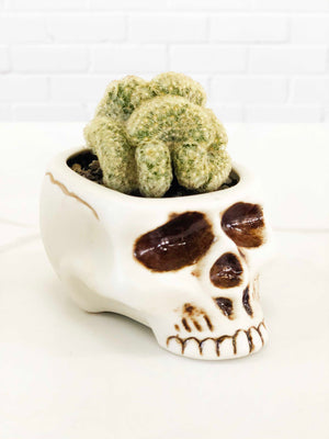 Open image in slideshow, Skull Planter with Brain Cactus |  | Interior Jungle