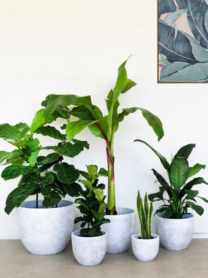 Twill Planters | Indoor Pot | Interior Jungle