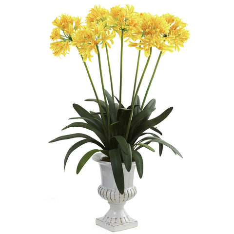 Yellow African Lily w/Urn