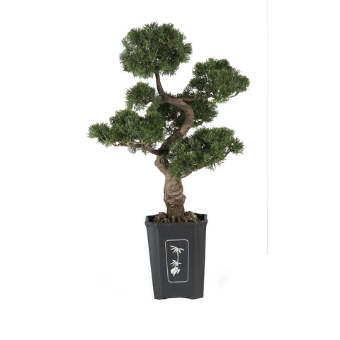 Cedar Bonsai Tree 36 in