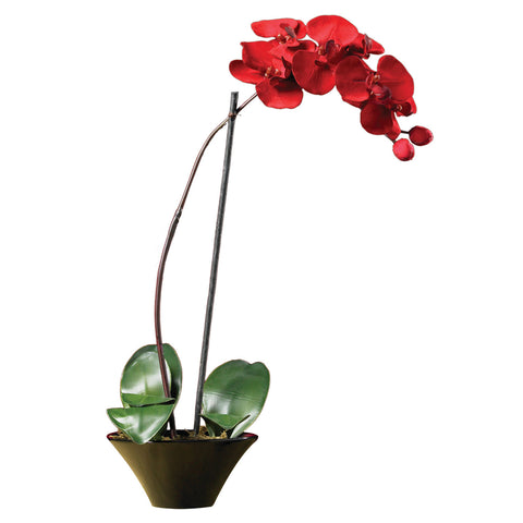 Red Holiday Phalaenopsis Orchid Arrangement