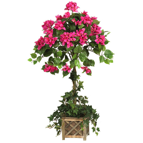 Beauty Bougainvillea Topiary w/Wood Box