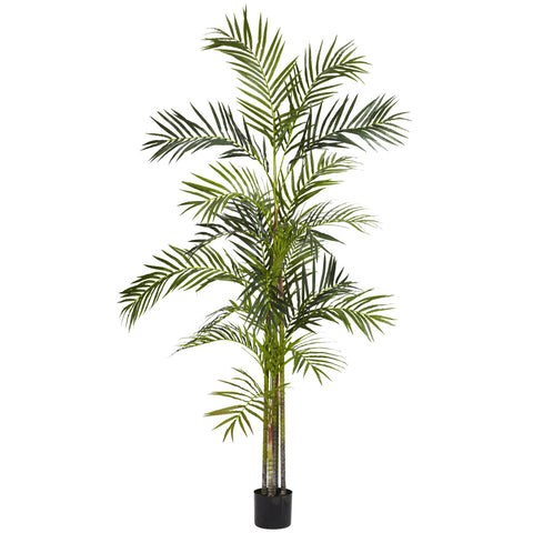 5' Areca Palm Tree