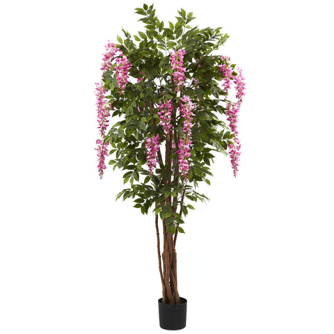 6' Wisteria Silk Tree\