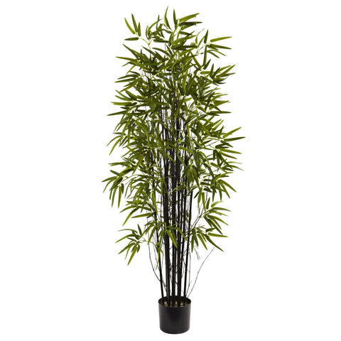 5' Black Bamboo Tree