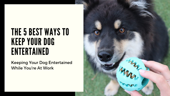 The 5 Best Ways to Keep Your Dog Entertained While You're at Work