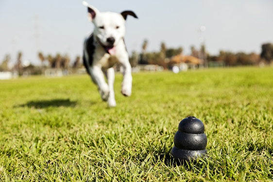 How to Keep a Hyperactive Dog Entertained