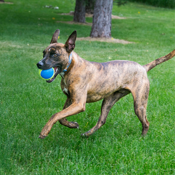Do Your Dog's Toys Match its Preferred Play Style?