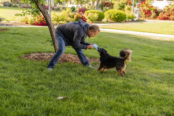 Which KONG Box is Right for Your Dog's Play Type?
