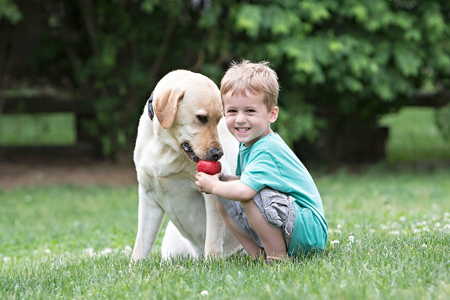 5 of the Best Dogs for Kids