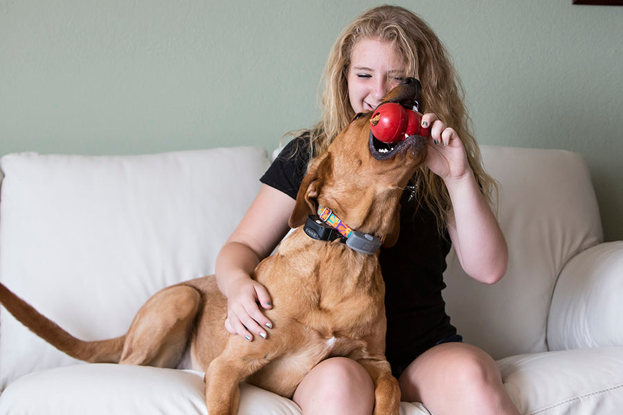 4 Easy Ways to Help With Your Dog's Separation Anxiety