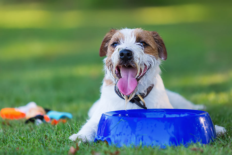 SIGNS OF A DOG OVERHEATING AND HOW TO FIX IT