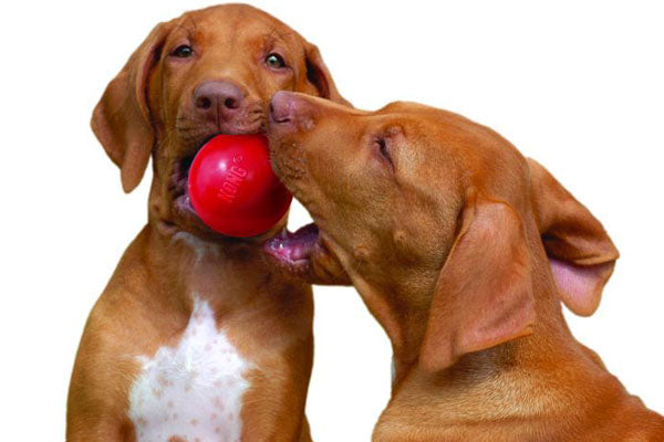 Identifying the Differences Between Dog Play and Aggression