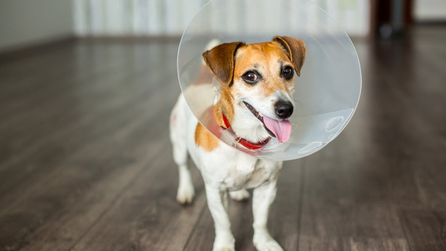 Spaying and Neutering: Everything You Need to Know
