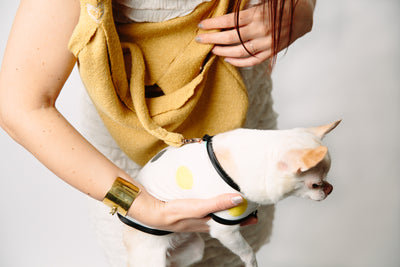 LUXURIOUS YELLOW POCKET DOG CARRIER on SHARK TANK by HEART PUP