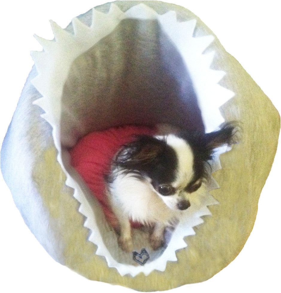 SHARK CAVE COUTURE PET BED-DOG BED-CAT BED