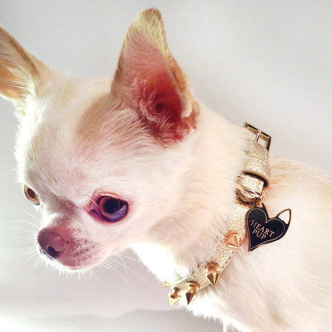 COLLAR GOLD  on SHARK TANK by HEARTPUP
