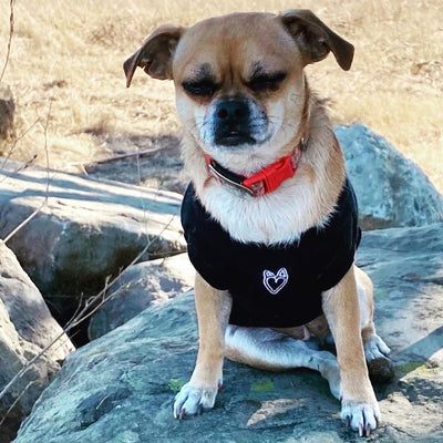 Actor d-ring pet harness t-shirt with reflective strip for small pets
