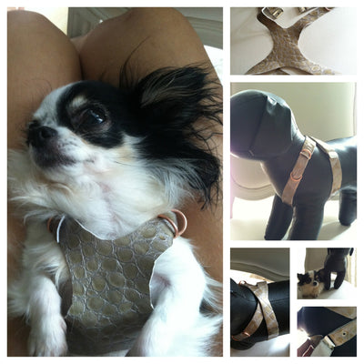 LEATHER DOG HARNESS adjust 2 to 10 lb