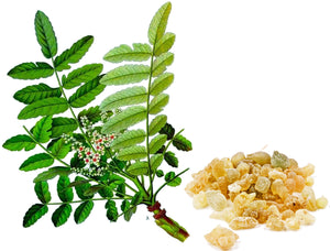 Boswellia – A Powerful Tool Against Inflammation