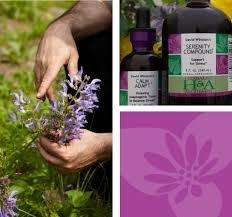 triptych of herbalist and alchemist products, and purple flowers