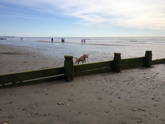 Reina flying over the groynes at West Wittering