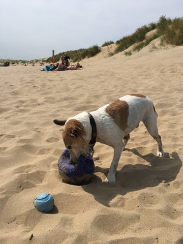 Taffy at Camber Sands beach