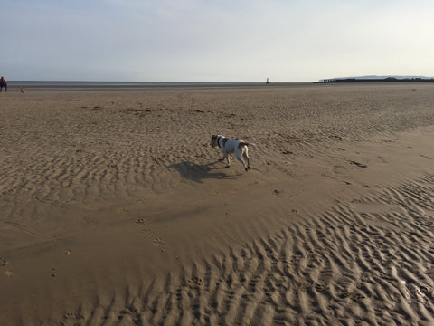 Taffy on the beach at Camber Sands