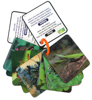 3D Flash cards - BUGS & INSECTS