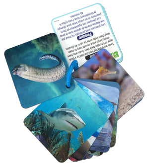 3D Flash cards - Marine animals