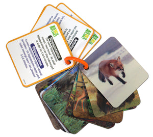 3D Flash cards - Wild animals