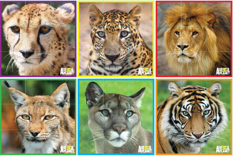 ANIMAL PLANET Puzzle Cubes - Big Cats