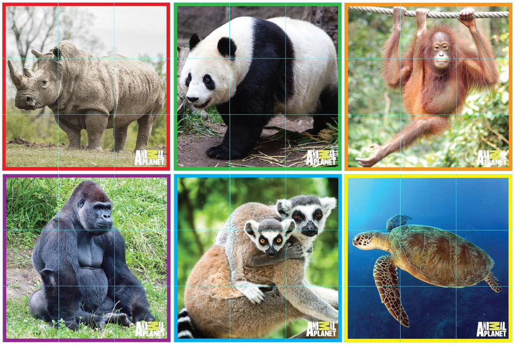 a report on the endangered species on our planet Endangered species are increasing rapidly but we can halt this planet peril rare animals nearing extinction often fetch high prices on the black market south american marmosets go for $2700 each, and endangered tortoises from madagascar fetch $500 each.