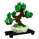 Pine Bonsai - OUT OF STOCK
