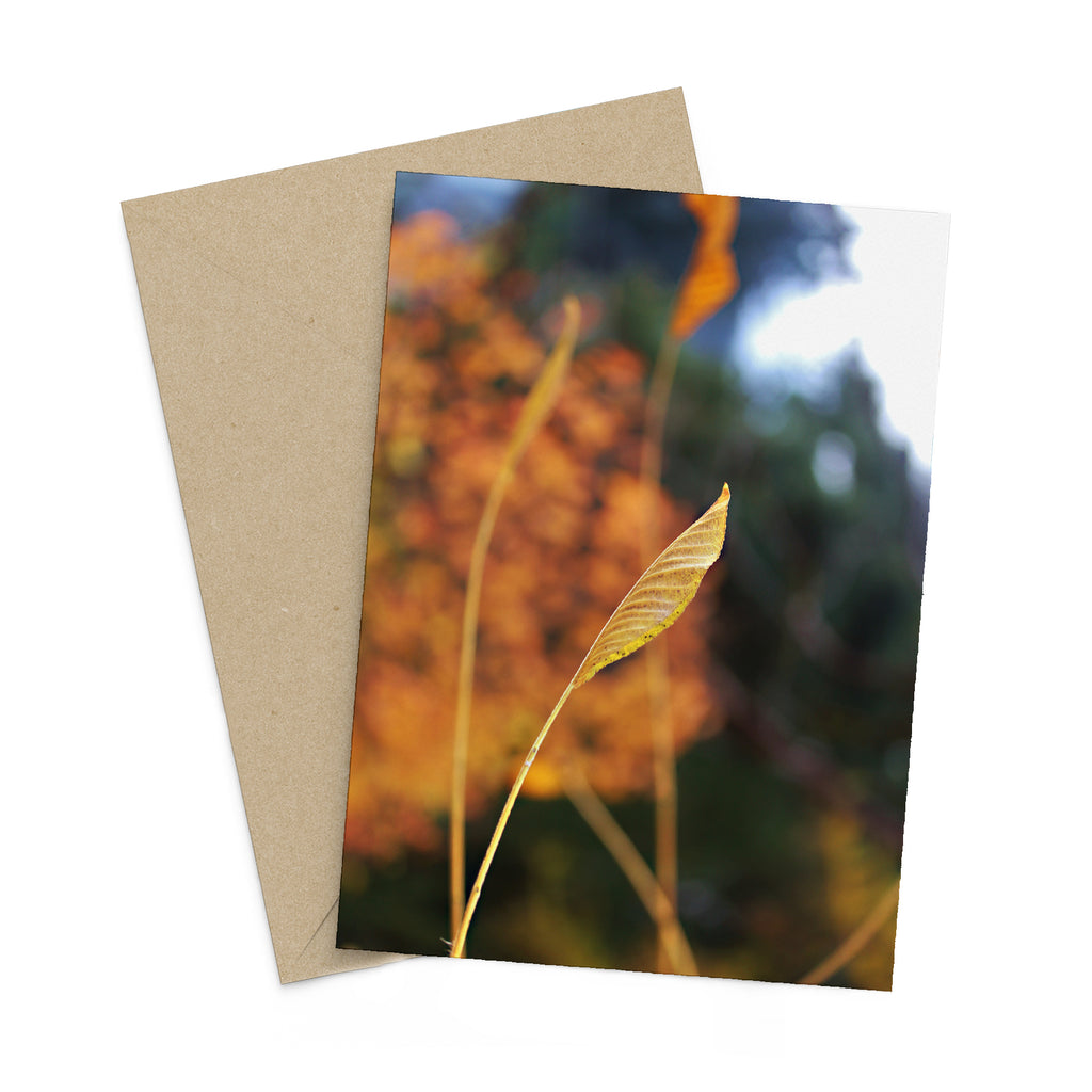 Fall Breeze greeting card