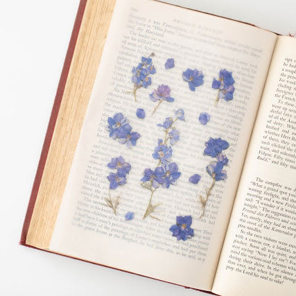 APPREE: Pressed Flower Sticker (Larkspur)