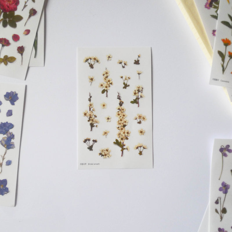 APPREE: Pressed Flower Sticker (Bridal Wreath)
