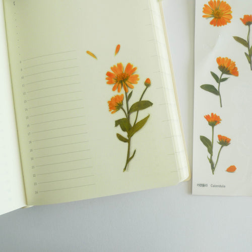 APPREE: Pressed Flower Sticker (Calendula)