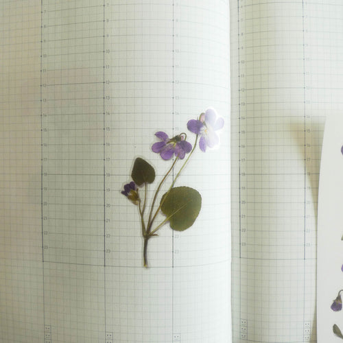 APPREE: Pressed Flower Sticker (Manchurian Violet)