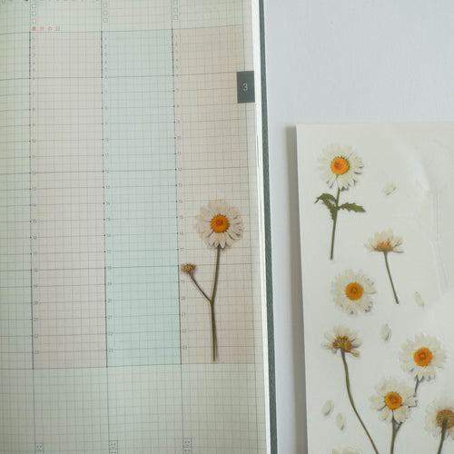 APPREE: Pressed Flower Sticker (Marguerite)