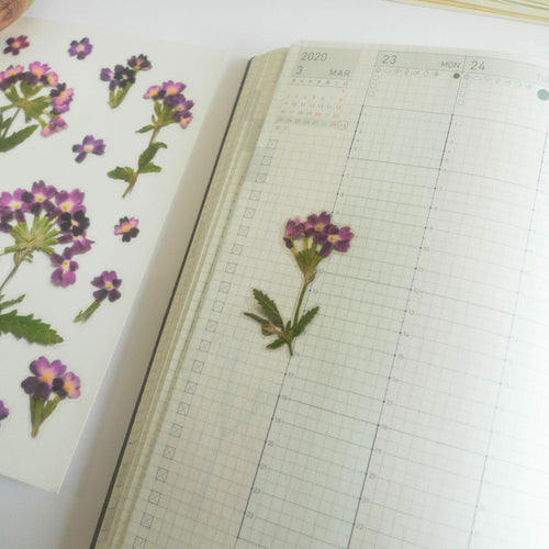 APPREE: Pressed Flower Sticker (Verbena)