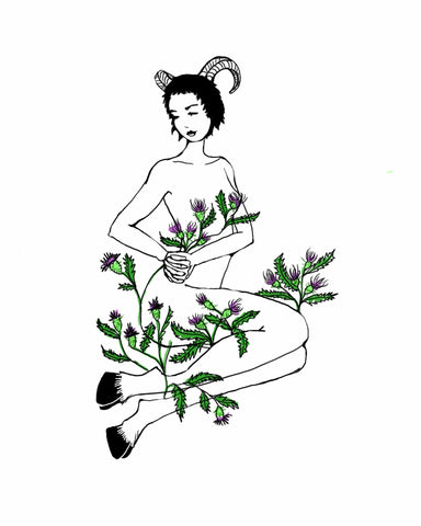 Aries' thistle. Illustration by Wren McMurdo