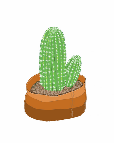 Cactus | Illustration by Wren McMurdo