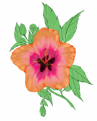 Hibiscus | Illustrations by Wren McMurdo
