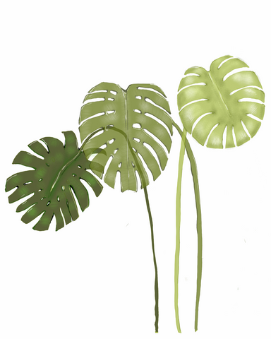 Monstera Leaves | Illustration by Wren McMurdo