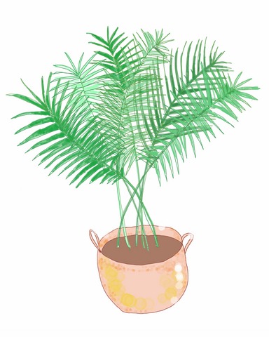 Palm | Illustration by Wren McMurdo